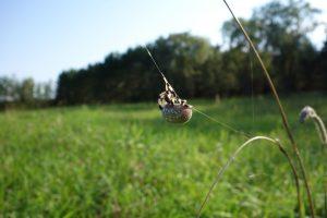 Spider on web strand.