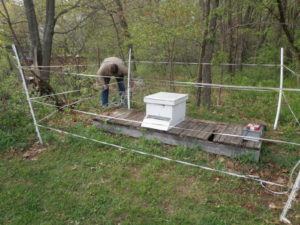 Installation of an electric fence to protect a bee hive from black bears.
