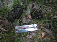 Deer droppings. Photo courtesy of Roger Barcus of MN.