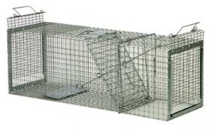 Safeguard cage trap, raccoon size. Photo by Safeguard.