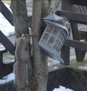 Squirrels can quickly wipe out your supply of bird seed!