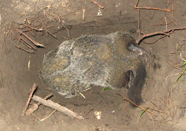 Carcass disposal. Photo by Wildlife Control Consultant, LLC